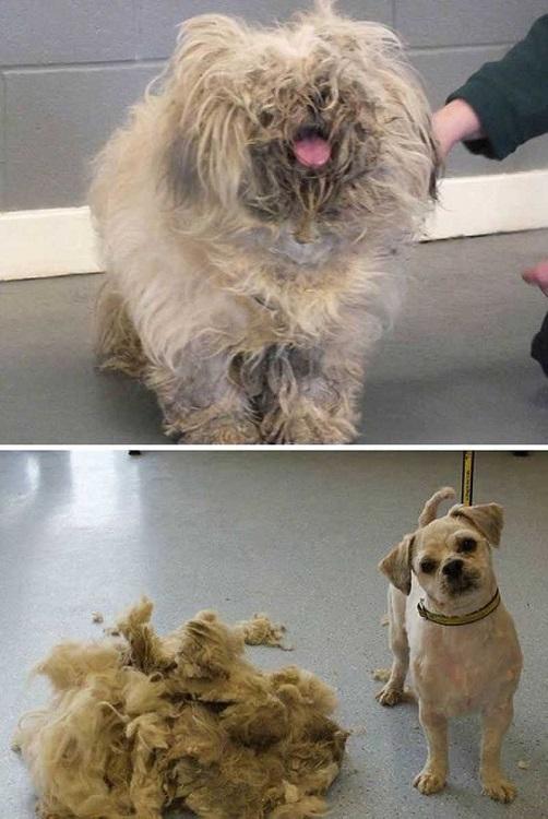 Dog-get-haircut.jpeg