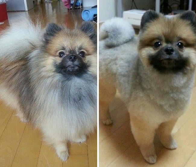 dog-before-and-after-haircut.jpg