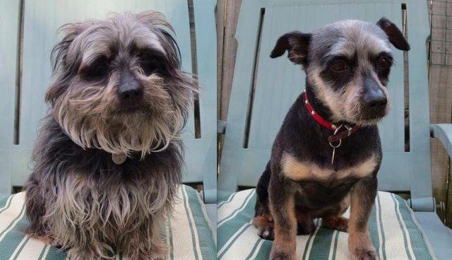 Funny-dog-haircuts.jpg