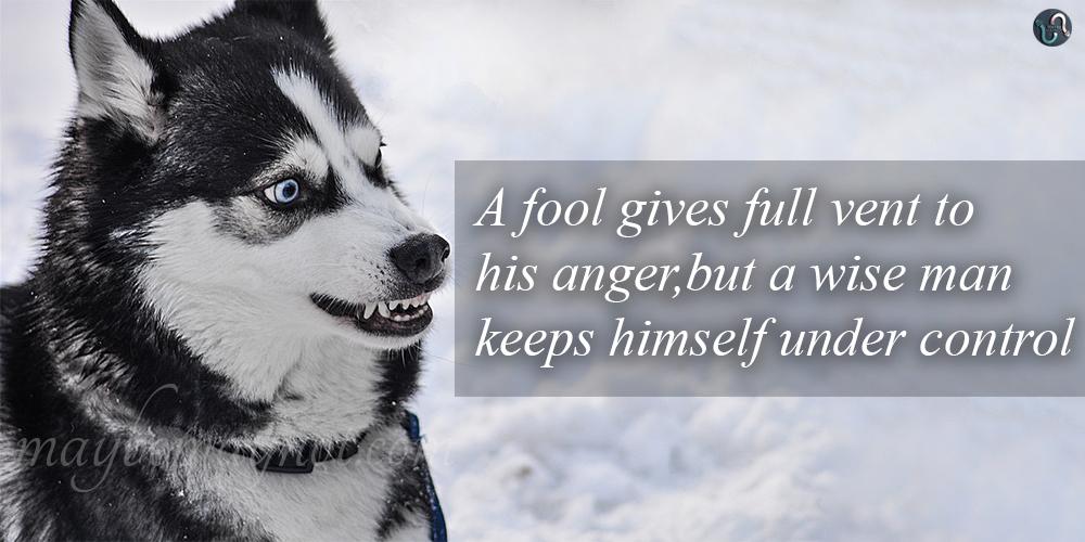 a_fool