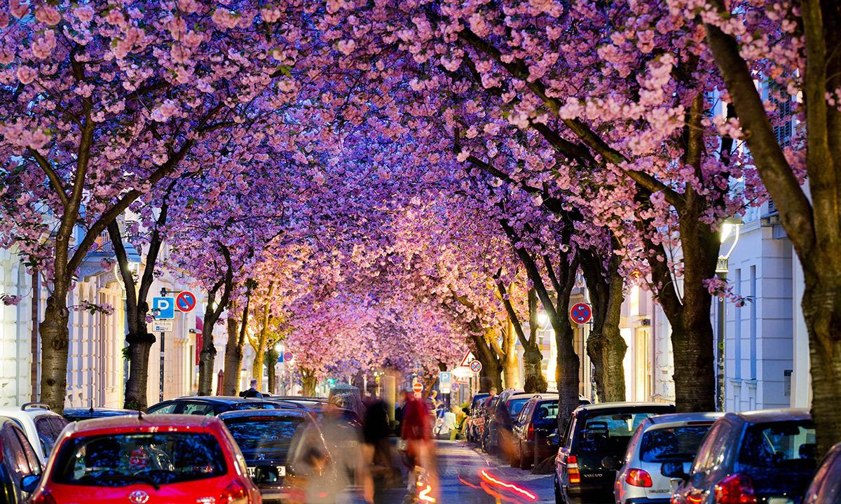 Image result for street in bonn