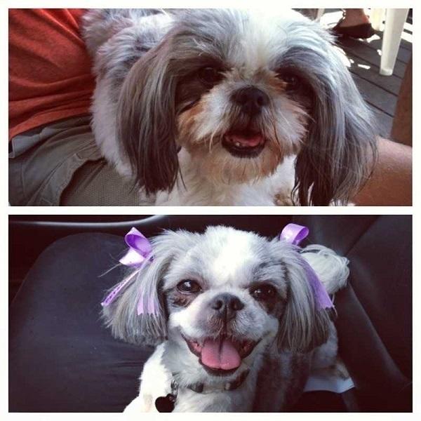Funny-dog-haircut.jpeg