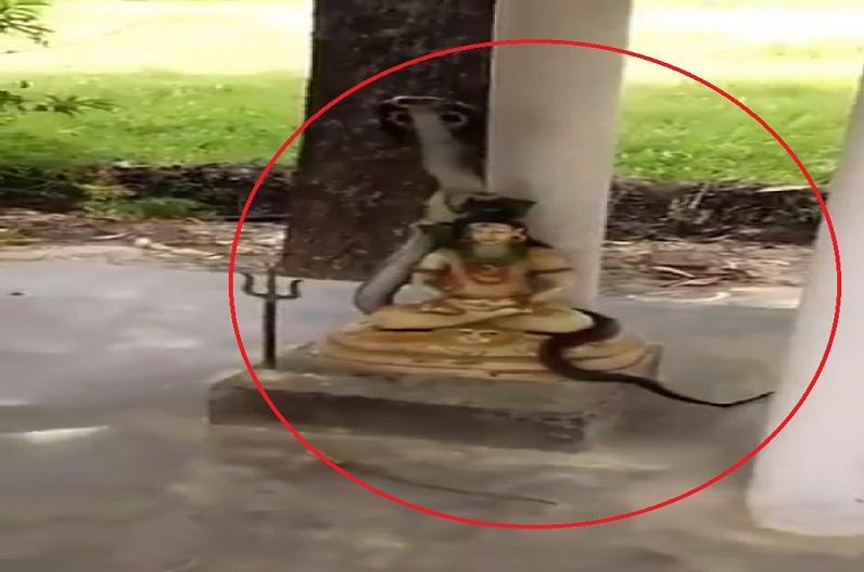 सावन माह.. और शिव की प्रतिमा पर फन फैलाए बैठा नाग.. IFS अफसर ने भी शेयर किया वीडियो