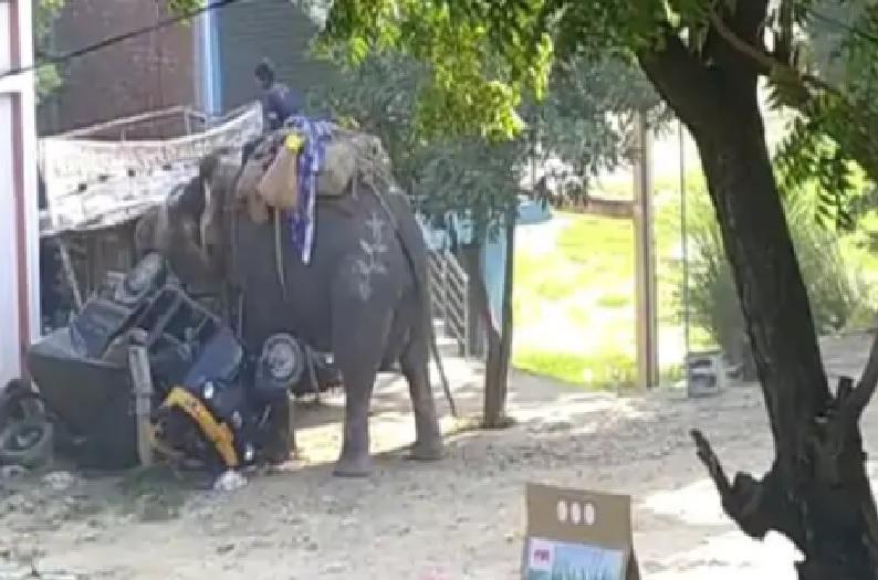 दशहरा मेला में हाथी का तांडव, कई वाहनों को पलटा, पंडाल क्षतिग्रस्त, मच गई अफरा-तफरी