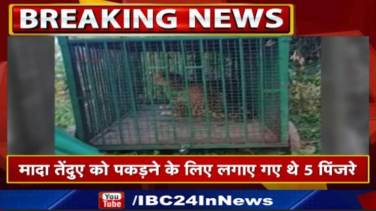 आदमखोर तेंदुआ वन विभाग के पिंजरे में कैद, 3 मासूमों को बना चुका था शिकार