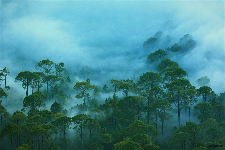 Fog covering most of the part of green forest covered with green tree during the monsoon season