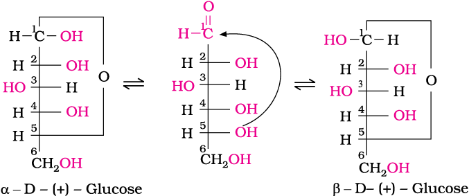 Image result for This behavior could not be explained by the open chain structure (I) for glucose. It was proposed that one of the —OH groups may add to the —CHO group and form a cyclic hemiacetal structure. It was found that glucose forms a six-membered ring in which —OH at C-5 is involved in ring formation. This explains the absence of —CHO group and also existence of glucose in two forms as shown below.