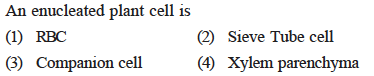 An enucleated plant cell is (1) RBC 3) Companion cell(4) Xylem parenchyma (2) Sieve Tube cell