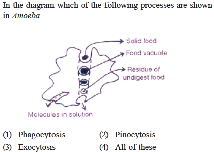 In The Diagram Which Of The Following In Amoeba Processes Are Sh Own