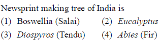 Newsprint making tree of India is (1) Boswellia (Salai) (2) Eucalyptus (3) Diospyros (Tendu) (4) Abies (Fir)