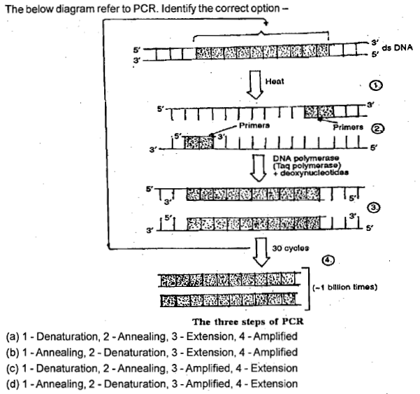 The below diagram refer to pcr identify the correct option 3 5 3 the below diagram refer to pcr identify the correct option 3 5 3 ccuart Choice Image