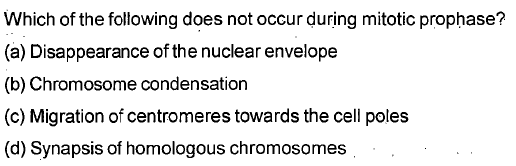 Which of the following does not occur during mitotic prophase? (a) Disappearance of the nuclear envelope (b) Chromosome condensation (c) Migration of centromeres towards the cell poles (d) Synapsis of homologous chromosomes