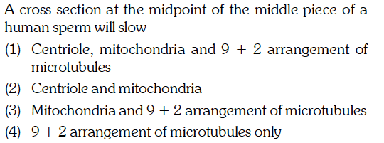 A Cross Section At The Midpoint Of Middle Piece Human Sperm Will Slow