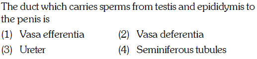 om testis and epididymis to The duct which carries sperms fr the penis is (1) Vasa efferentia (3) Ureter (2) Vasa deferentia 4) Seminiferous tubules