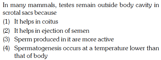 In many mammals, testes remain outside body cavity in scrotal sacs because (1) It helps in coitus (2) It helps in ejection of semen (3) Sperm produced in it are more active (4) Spermatogenesis occurs at a temperature lower than that of body