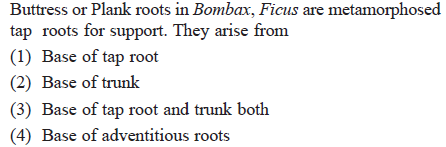 Buttress or Plank roots in Bombax, Ficus are metamorphosed tap roots for support. They arise from (1) Base of tap root (2) Base of trunk (3) Base of tap root and trunk both (4) Base of adventitious roots