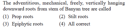 The adventitious, mechanical, freely, vertically hanging downward roots from stem of Banyan tree are called (1) Prop roots (3) Epiphytic roots(4) All correct (2) Stilt roots