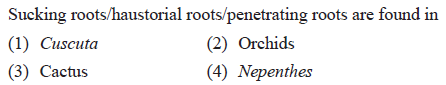 Sucking roots/haustorial roots/penetrating roots are found in (1) Cuscuta (3) Cactus (2) Orchids (4) Nepenthes