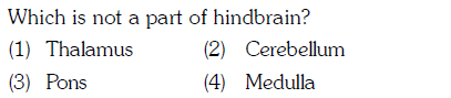 Which is not a part of hindbrain? (1) Thalamus (3) Pons (2) Cerebellum (4) Medulla