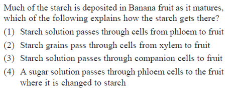 Much of the starch is deposited in Banana fruit as it matures, which of the following explains how the starch gets there? (1) Starch solution passes through cells from phloem to fruit (2) Starch grains pass through cells from xylem to fruit (3) Starch solution passes through companion cells to fruit (4) A sugar solution passes through phloem cells to the fruit where it is changed to starch