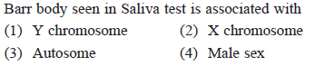 Barr body seen in Saliva test is associated with (1) Y chromosome (3) Autosome (2) X chromosome (4) Male sex