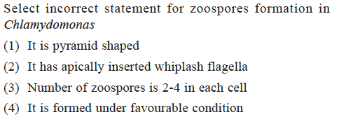 Select incorrect statement for zoospores formation in Chlamvdomonas (1) It is pyramid shaped (2) It has apically inserted whiplash flagella (3) Number of zoospores is 2-4 in each cell (4) It is formed under favourable condition