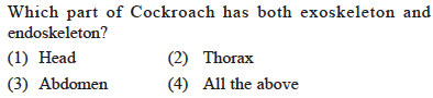 Which part of Cockroach has both exoskeleton and endoskeleton? (1) Head (3) Abdomen (2) Thorax (4) All the above