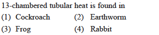 13-chambered tubular heat is found in (1) Cockroach (2) Earthworm (3) Frog 4) Rabbit