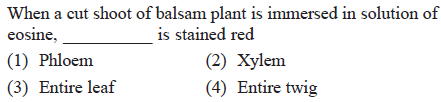 When a cut shoot of balsam plant is immersed in solution of eosine e,is stained red (2) Xylem (4) Entire twig (1) Phloem (3) Entire leaf