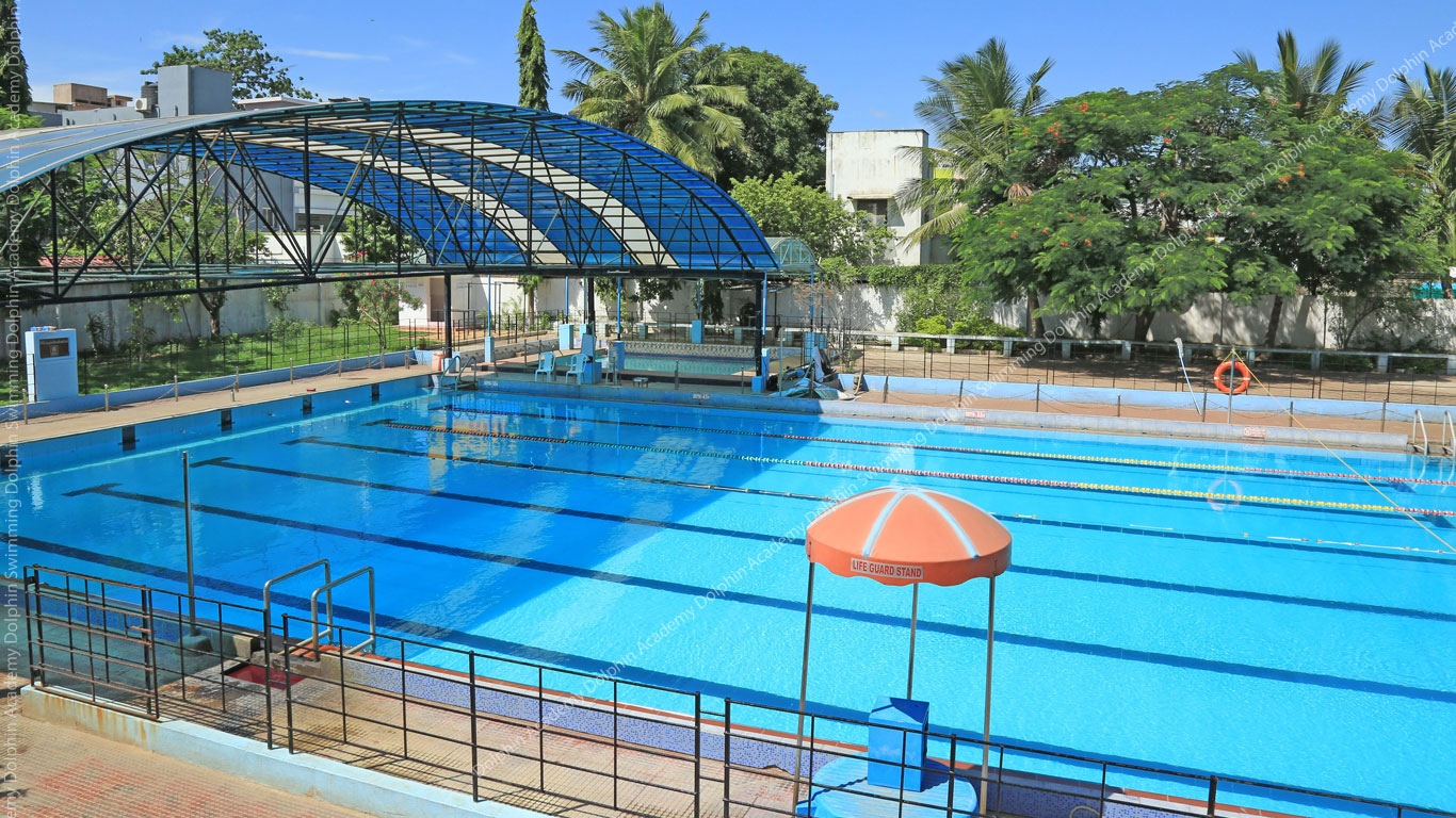 Dolphin Swimming Academy Schoolconnects Schools