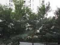 15F2U00393: Balcony 1
