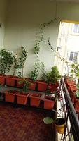 12M5U00225: Balcony 1