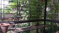 11S9U00194: Balcony 3