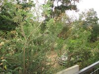 12J6U00541: Balcony 1
