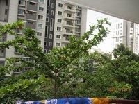 13DCU00522: Balcony 2