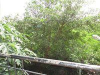 10J6U00523: Balcony 1