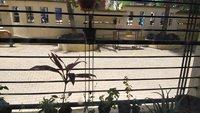 11M3U00145: Balcony 1