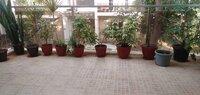 15S9U00906: Balcony 1