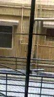 15J1U00477: Balcony 1