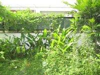14M5U00015: Garden 1
