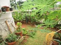 11J6U00372: Garden 1