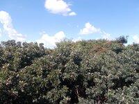14NBU00032: Balcony 1