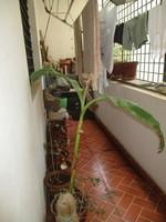 10M3U00046: Balcony 1