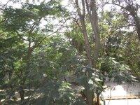 14DCU00526: Balcony 1