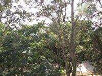 14DCU00526: Balcony 2