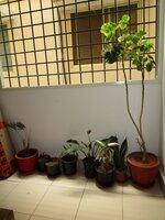 14DCU00583: Balcony 2