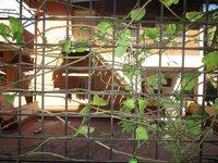 14DCU00570: Balcony 1
