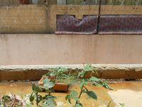13J7U00407: Balcony 1