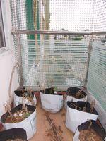 12J6U00317: Balcony 2