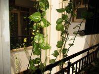 10J7U00203: Balcony 1